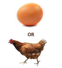 egg or chicken